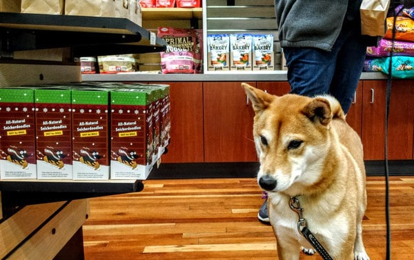 Akira with KC Dog Club at Three Dog Bakery
