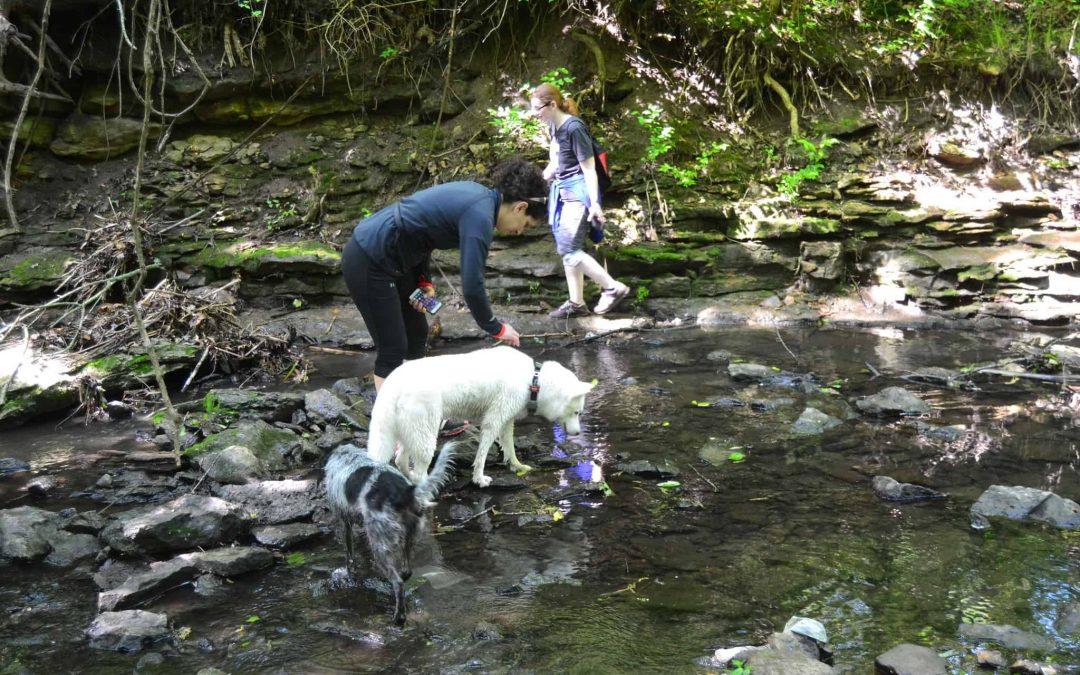 Celebrate National Trails Day 2016 with Kansas City Dog Club