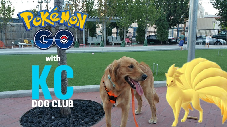 Guide to Playing Pokemon GO with Your Dog