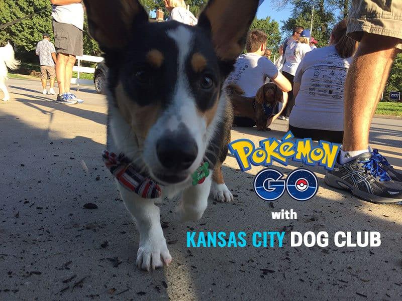 Dog Friendly Spots to Play Pokémon GO in Kansas City