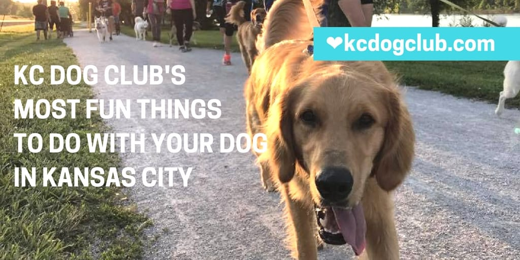 KC Dog Club's Most Fun Things to Do with Your Dog in Kansas City