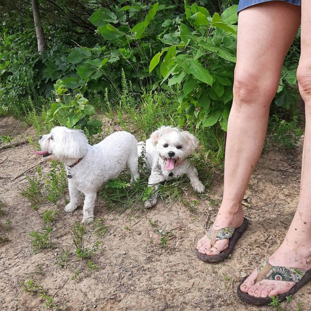 Pinot and Piper at Shawnee Mission Dog Park with Kansas City Dog Club